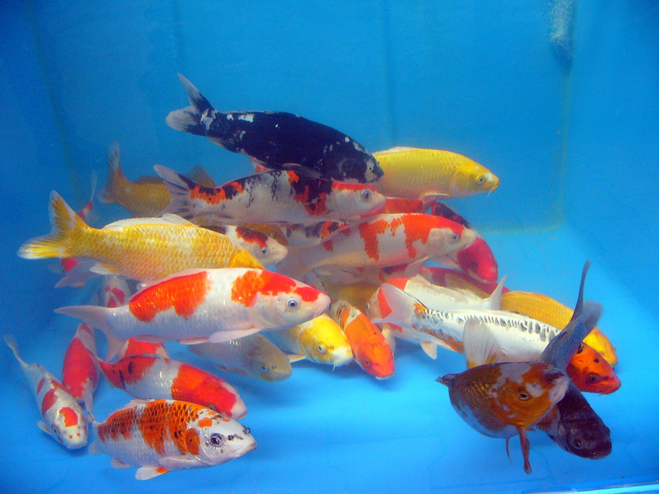 Храна за риби